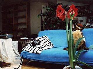 At home 2005
